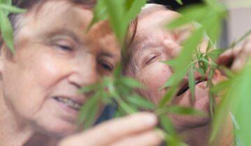 Deux fois plus de séniors canadiens consomment du cannabis médical