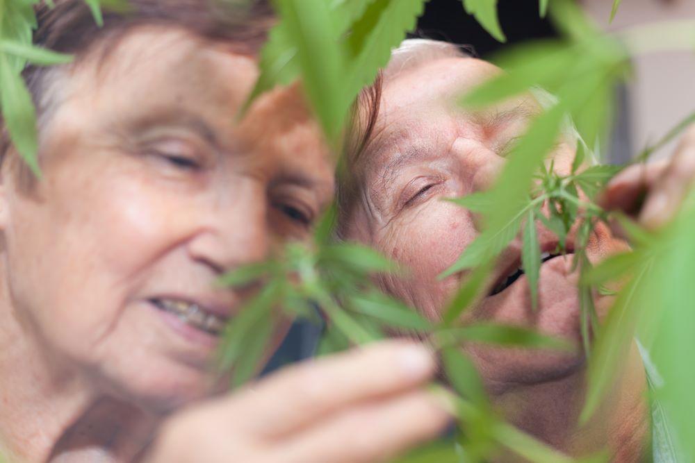 séniors cannabis médical